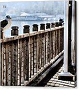 Seagull On The Boardwalk Acrylic Print