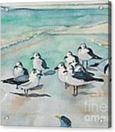 Seagull Party Acrylic Print