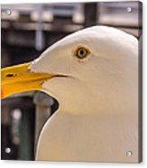 Seagull Profile Acrylic Print