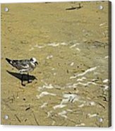 Seagull Scurry  Acrylic Print