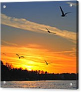 Seagull Serenity Acrylic Print