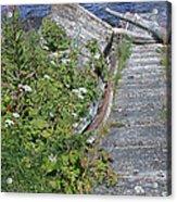 Seagull Steps Guard Island Alaska Acrylic Print