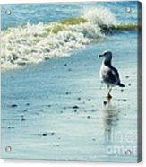 Seagull Stroll Acrylic Print