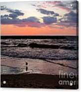 Seagull With Sunset Acrylic Print