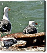 Seagulls Against Rust Acrylic Print