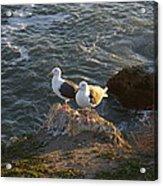 Seagulls Aka Pismo Poopers Acrylic Print