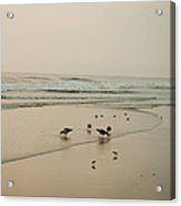 Seagulls And Sandpipers Acrylic Print