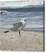 Seagulls At Fernandina 2 Acrylic Print by Cathy Lindsey