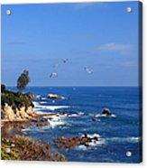 Seagulls At Laguna Beach Acrylic Print