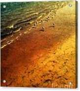 Seagulls At Sunset Acrylic Print