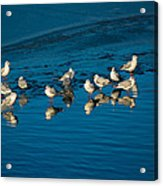 Seagulls On Frozen Lake Acrylic Print