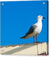 Seagulls On Roof Top Acrylic Print