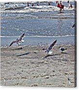 Seagulls On The Beach Acrylic Print