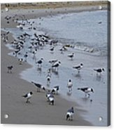 Seagulls On The Delaware Bay Acrylic Print by Bill Cannon
