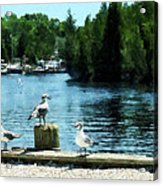 Seagulls On The Pier Acrylic Print