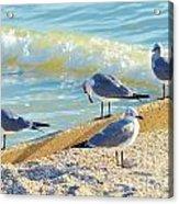 Seagulls On Wall Acrylic Print