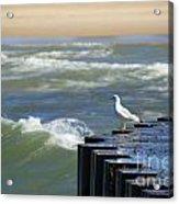 Seagull's Perch Acrylic Print