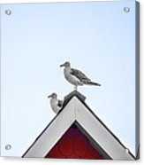 Seagulls Perched On The Rooftop Acrylic Print