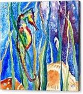 Seahorse And Shells Acrylic Print