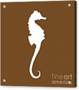 Seahorse In Brown And White Acrylic Print