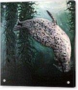 Seal In The Kelp Acrylic Print