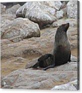 Seal In The Sun Acrylic Print