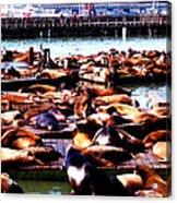 Seal Wharf Acrylic Print