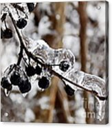 Sealed In Ice Acrylic Print