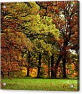 Searching For Maple Magic Acrylic Print
