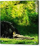 Searching For That Last Termite Acrylic Print