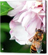 Searching Pink Flower Acrylic Print
