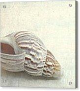 Seashell 6800 Acrylic Print