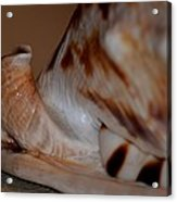 Seashell Abstract 1 Acrylic Print