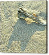 Seashell And Shadow On Sand Acrylic Print