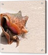 Seashell At The Beach Acrylic Print