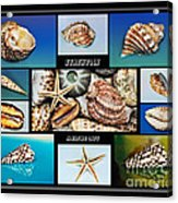 Seashell Collection 2 Acrylic Print