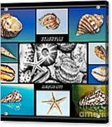 Seashell Collection Acrylic Print by Kaye Menner