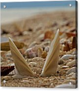 Seashell Graveyard Acrylic Print
