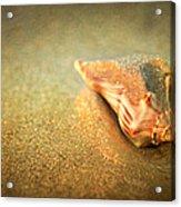 Seashell Acrylic Print