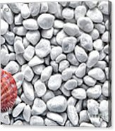 Seashell On White Pebbles Acrylic Print