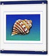 Seashell Wall Art 1 - Blue Frame Acrylic Print