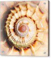 Seashell Wall Art 11 - Spiral Of Harpa Ventricosa Acrylic Print