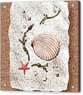 Seashell With Pearls Sea Star And Seaweed  Acrylic Print