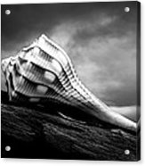 Seashell Without The Sea Acrylic Print