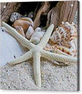 Seashells And Driftwood 2 Acrylic Print