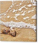 Seashells And Lace Acrylic Print