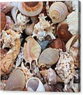 Seashells - Vertical Acrylic Print