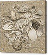 Seashells Collection Drawing Acrylic Print