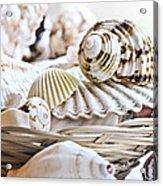 Seashells Acrylic Print by Elena Elisseeva