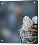 Seashells On Driftwood  Acrylic Print